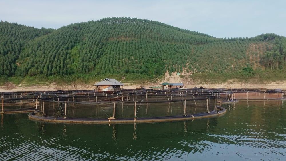 Mô hình tiềm năng: ống nhựa HDPE làm lồng bè nuôi cá