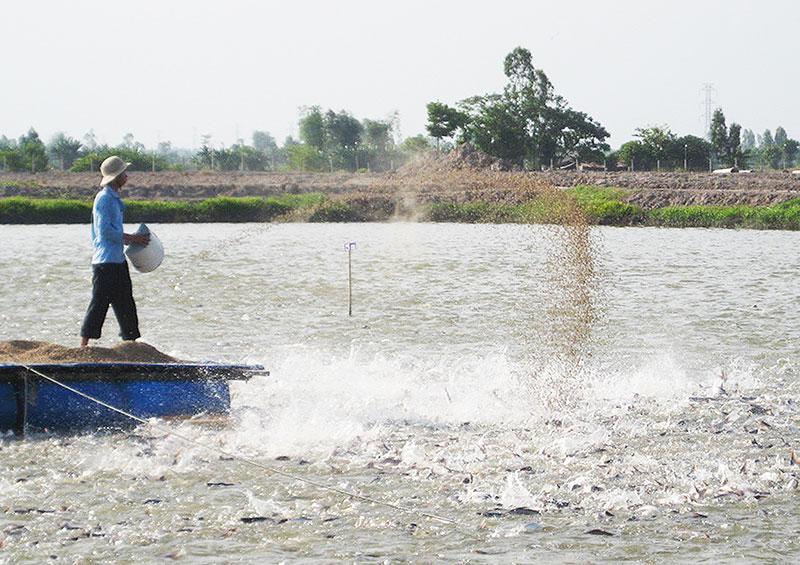 Nuôi hải sản quy mô nhỏ trên ao là thói quen của người Việt Nam.